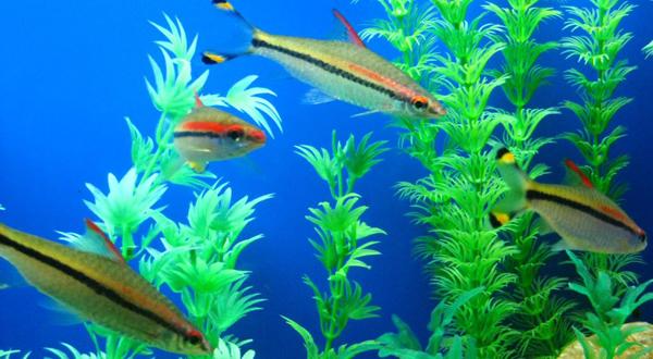 壁纸 海底 海底世界 海洋馆 水草 水生植物 水族馆 600_330